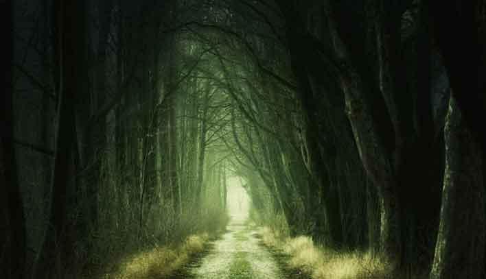 Hutan Hijau dan Gelap